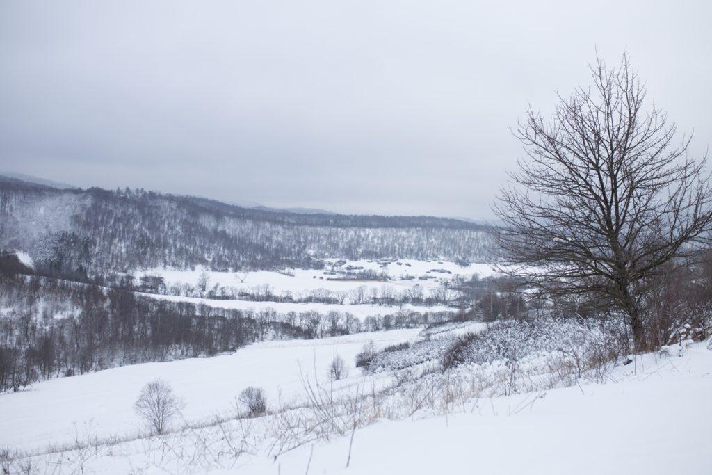 krywe zimą